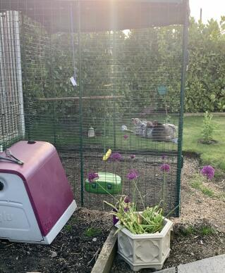 Our chickens new home, they are very happy