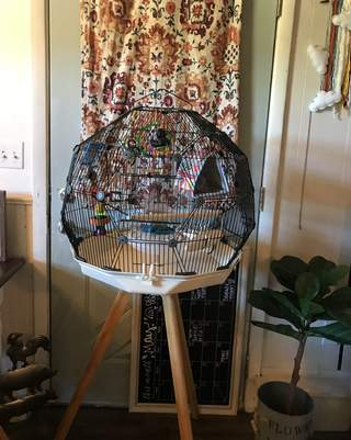 Geo bird cage black and white with stand.
