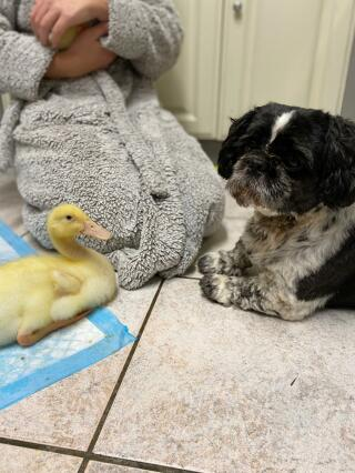 One dog and his duck