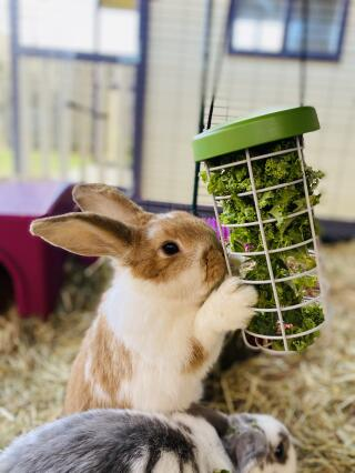 Our rabbits love eating veg out of the treat holder!