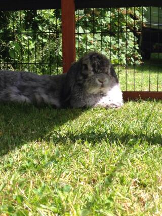 Freddie enjoying the sun!
