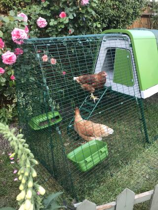 Mabel and Gertie getting to know their new home