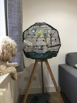 A beautiful cage for our new pets.