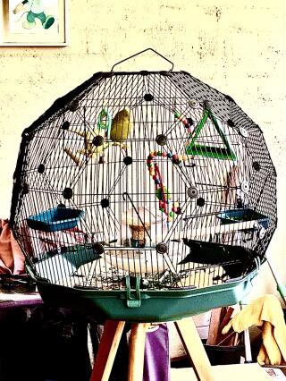 Budgies love their new home