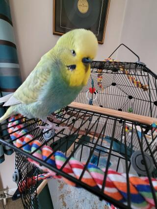 Captain Beaky getting used to his new home.