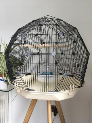 Here is the Geo Cage we bought. Can't wait to get our budgies!!!