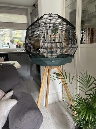 New bird Endeavour in his fancy new cage ????