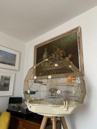 PiPi in his wonderful cage. He's refound his voice.