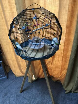 Stylish modern bird cage. I love it and so does Billy my budgie