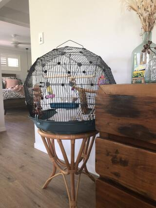 Sunnie loves his new cage!