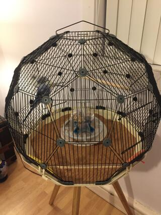 The best bird cage ever, Evie and Gemini love it