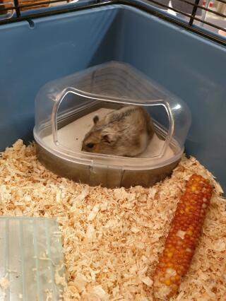 My hamster loves to sit in his bathing sand