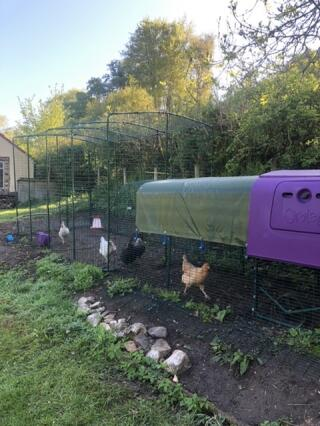 Happy chickens!