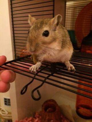 A happy gerbil!