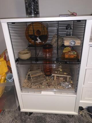Remi-Oreo is loving her new cage!