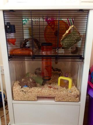 Set up and ready for our new addition, Oreo :)