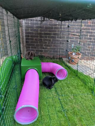 Our rabbits live the shelter and play tunnels.  Both inside and on top! ????