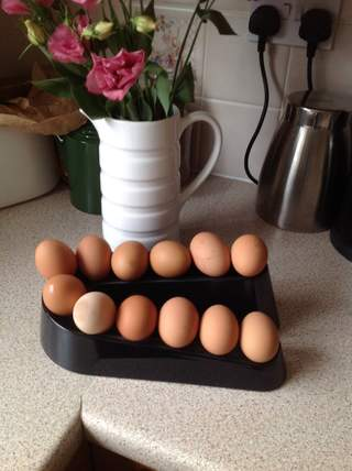 Egg ramp holds 12 eggs