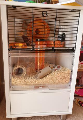 Gerbil cage all set up
