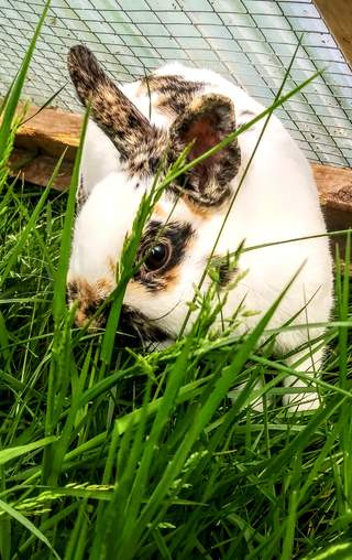 Sniffles Loves Grass!