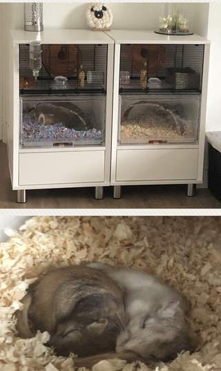 Our two gerbils, Ty and Caleb, in their two Omlet cages.