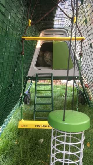 Our two silkies loving their Eglu Go Up, Chicken Swing, Combi Cover :-)