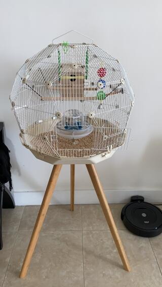 Great cage