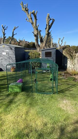 12ft run attached to bunny shed :)