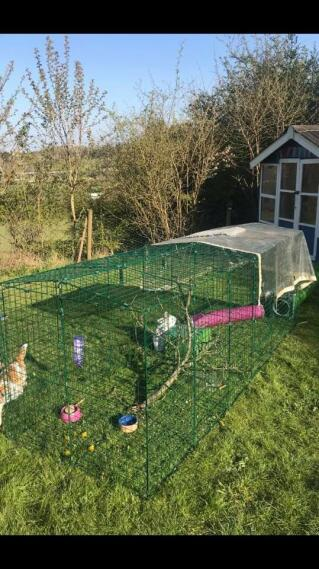 happy home for the bunnies