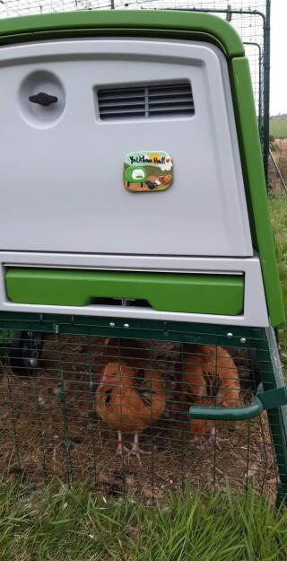 Yolkham Hall....perfect name for North Norfolk chooks
