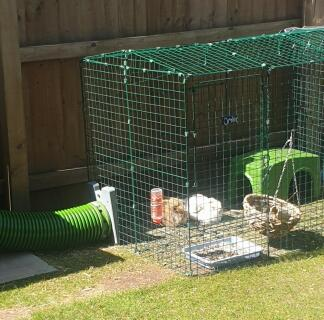 This run is the best thing we ever did, rabbits are so happy with constant access to outdoor space!