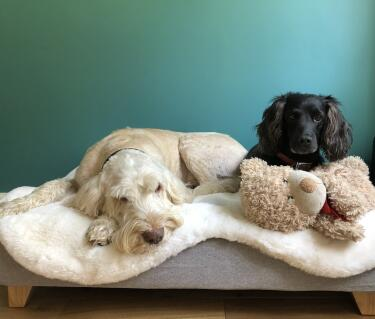 We love our new bed ! There's even room for Teddy!