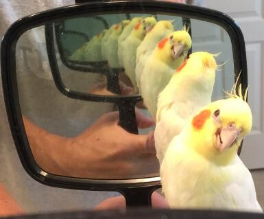 Sammy is blind, but he smiles in the mirror