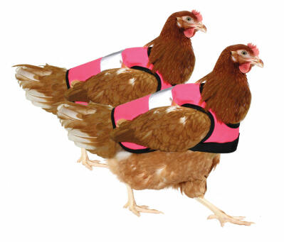 Pack doble de chalecos reflectantes para gallinas - Rosa