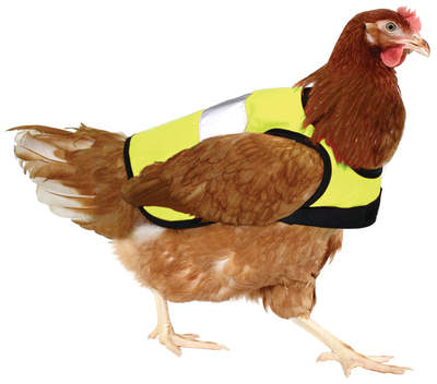Yellow High-Vis Chicken Jacket