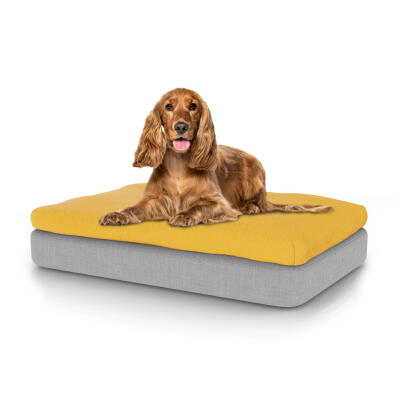 Topology Dog Bed with Beanbag Topper - Medium