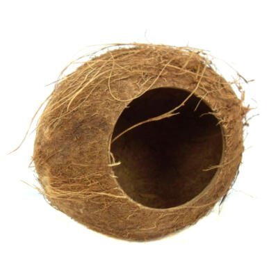 Nature's First Coconut Hut for Small Animals