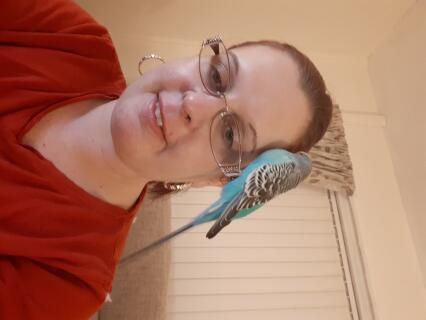 My budgie Billy bob feeling contented on my glasses!