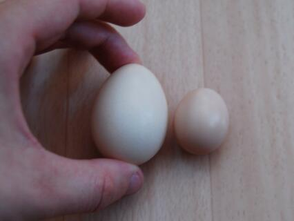 These were laid by the same hen, a day apart.