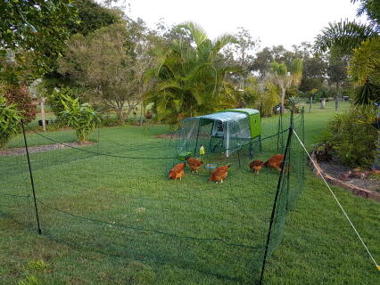Our sussex chickens have settled in