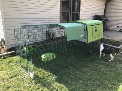 Loving the new coop!