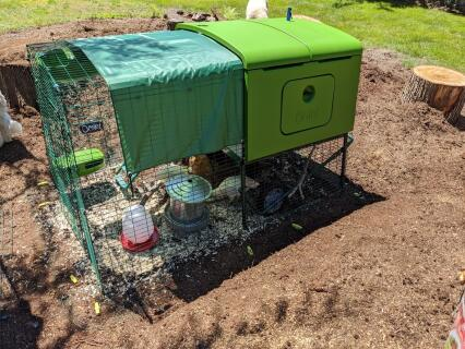 Our Chicken's New Home!