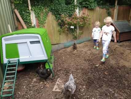 The plastic coop and sturdy mechanisms make it easy for kids to maintain and learn without damaging anything.