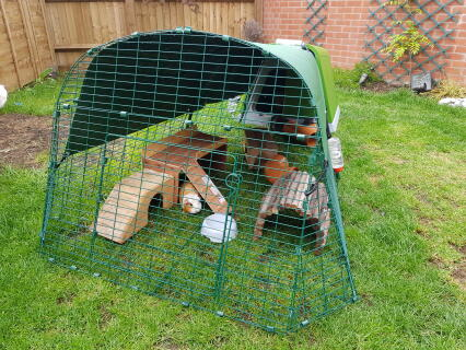 Hutch with 2m run for 3 guinea pigs