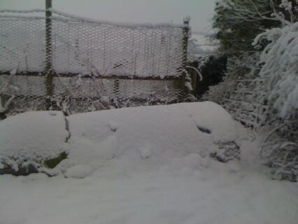 Spot the Egglu Classic ! (The hens were all snug in there !)