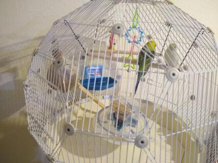 Best cage ever! Lemon and Rebecca love it!!