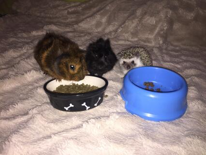my hungry little fluffs