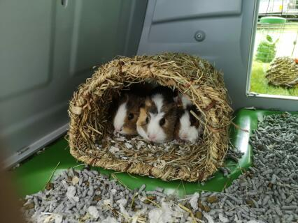Room for 3!
