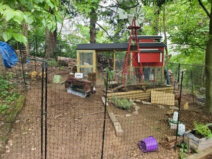 Chicken Habitat