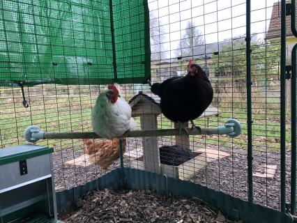 My chickens love using this perch.
